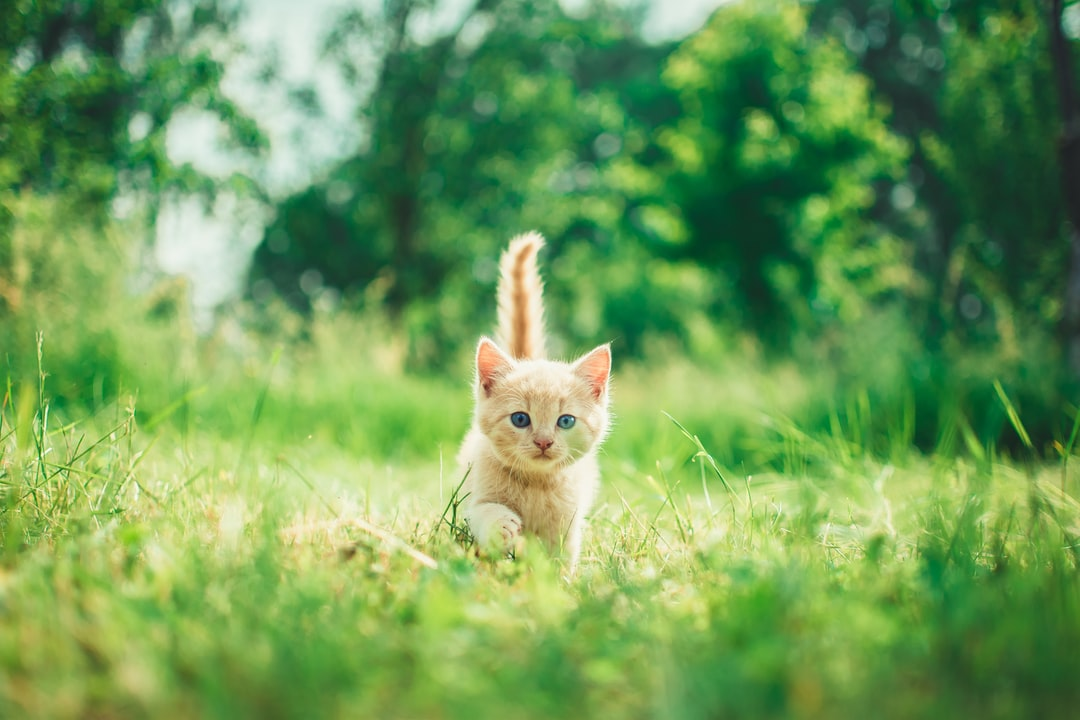 A cat sitting on top of a grass covered field